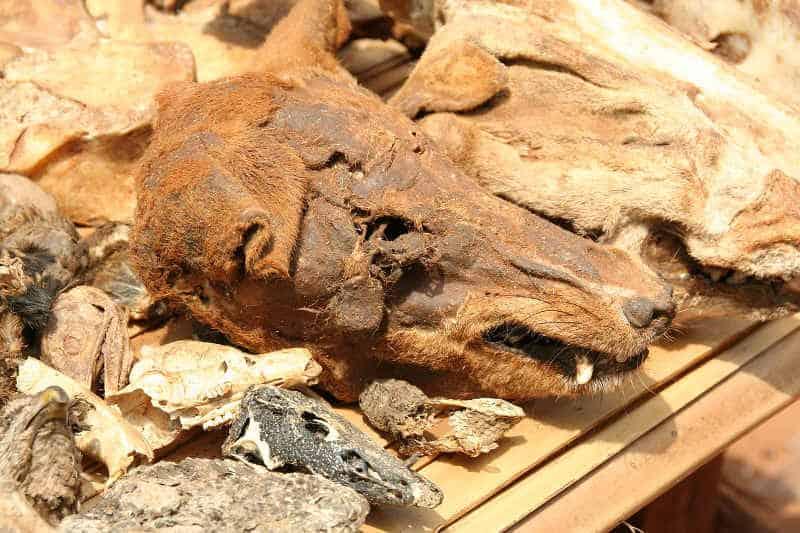 ofiary ze zwierząt w kulcie voodoo