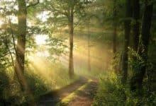 Photo of 20 najpopularniejsze drzewa w Polsce: opisy i cechy