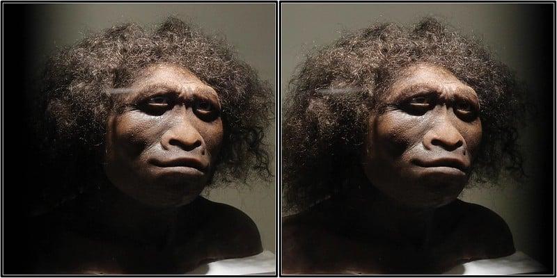 rekonstrukcja homo habilis