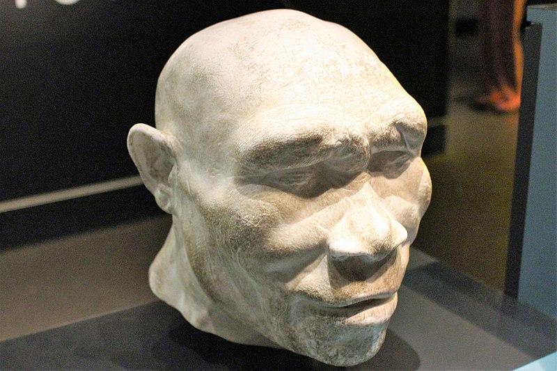 rekonstrukcja homo erectus