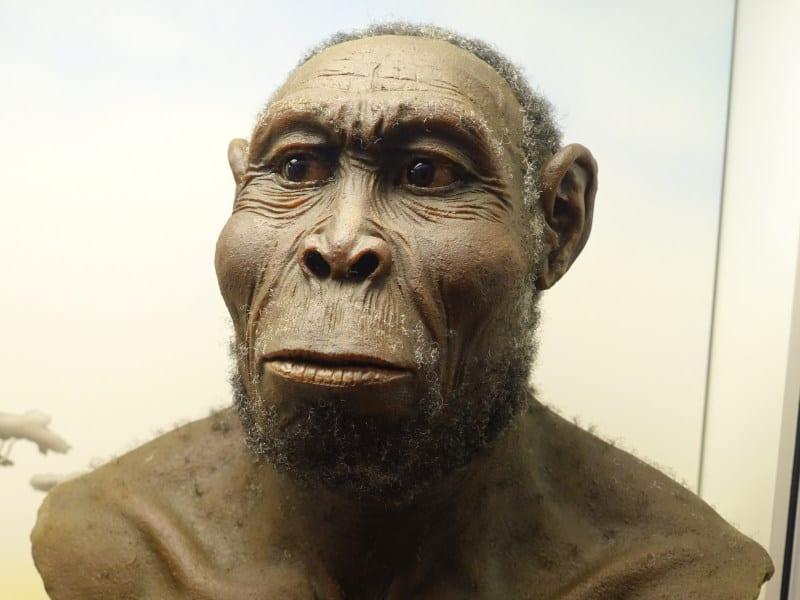 gatunki człowieka - rekonstrukcja homo rudolfensis