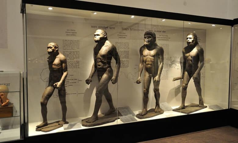 gatunki człowieka ewolucja