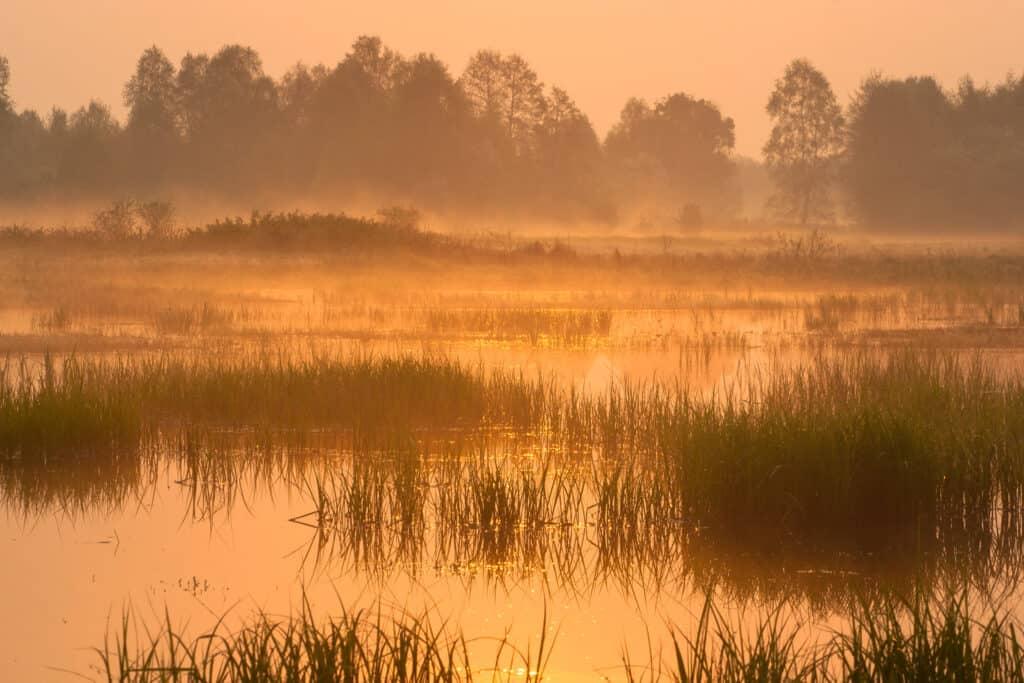 Kampinoski Park Narodowy - parki narodowe w Polsce
