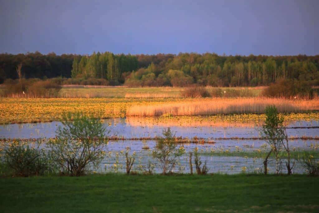 Parki narodowe w Polsce: Biebrzański Park narodowy