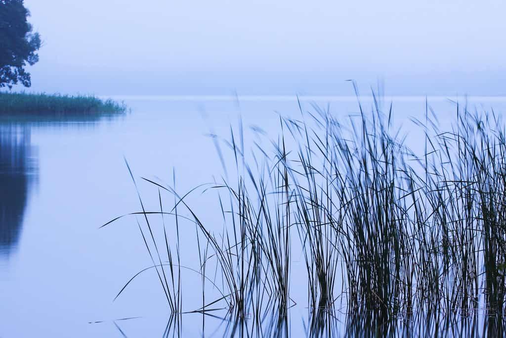 Wigierski Park Narodowy, Jezioro Wigry