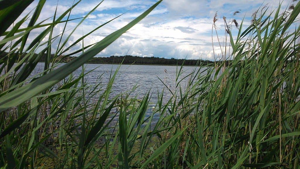 Poleski Park Narodowy, Jezioro Moszne
